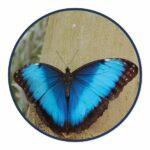 Carbet Amazonien ferme aux papillons